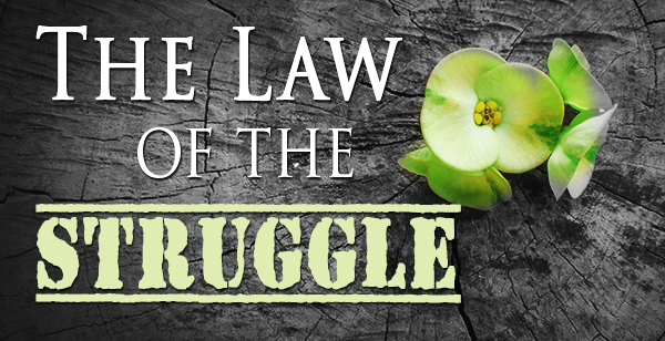 The law of the Struggle blog